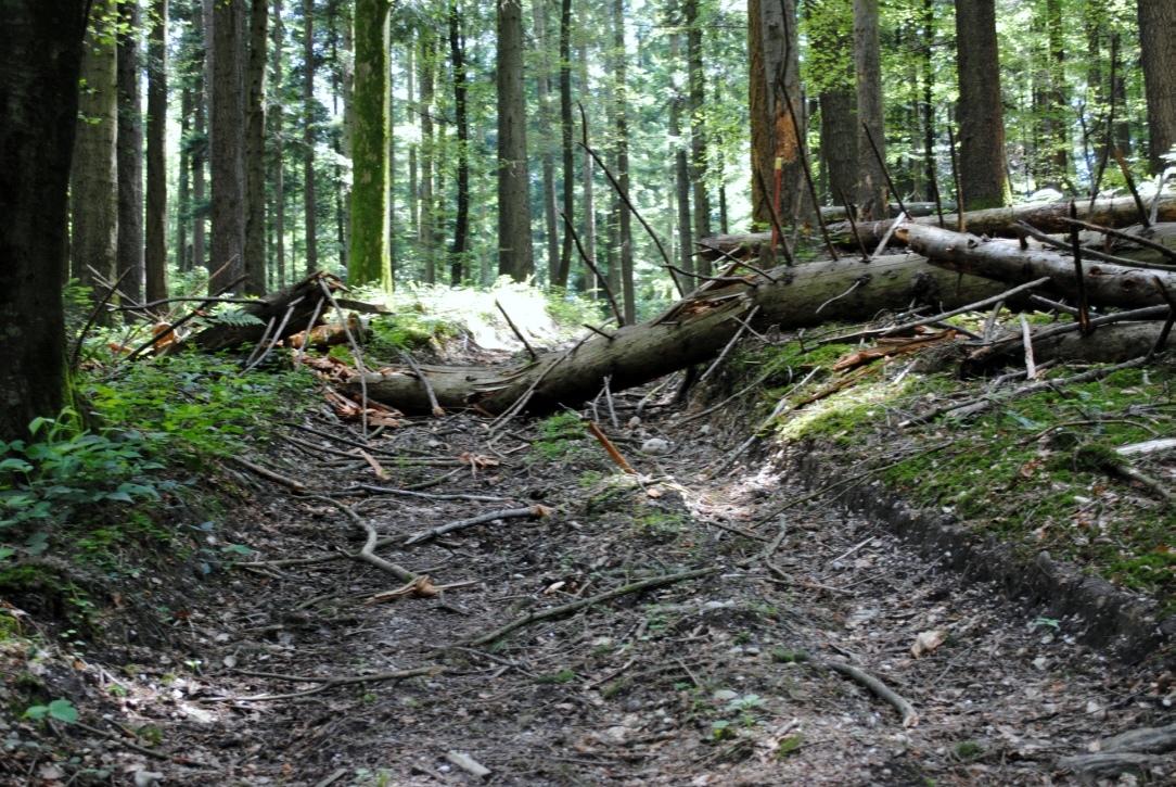 Bei T.J. Forrester ist der Appalachian Trail ein düsterer Ort.